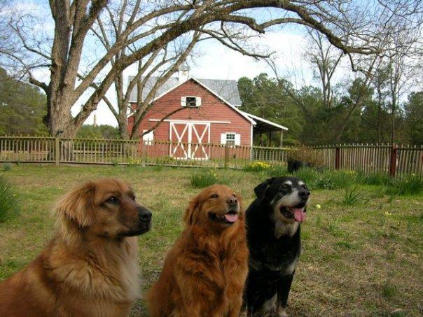 dogs-barn
